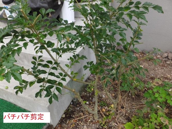 DSCF3234_1.jpg