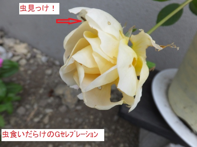 DSCF3252_1.jpg