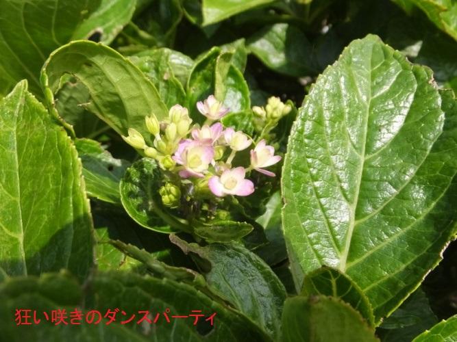 DSCF3336_1.jpg