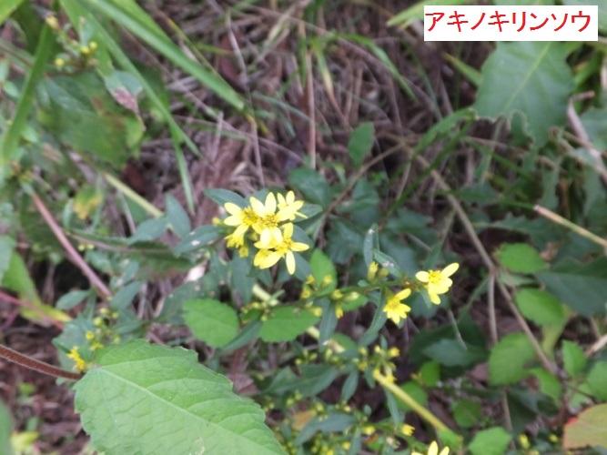 DSCF3396_1.jpg