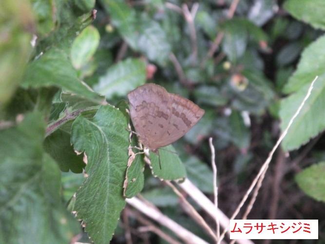 DSCF3407_1.jpg