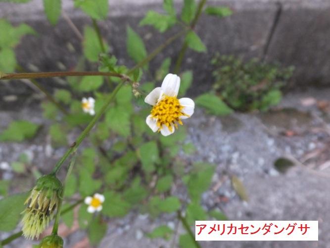 DSCF3412_1.jpg