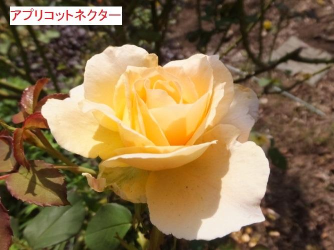 DSCF3458_1.jpg