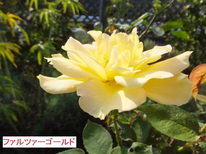 DSCF3511_1_201710121500516cc.jpg