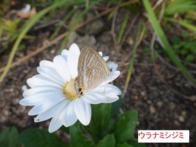 DSCF3514_1.jpg
