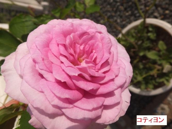 DSCF3518_1_20171012150035f65.jpg