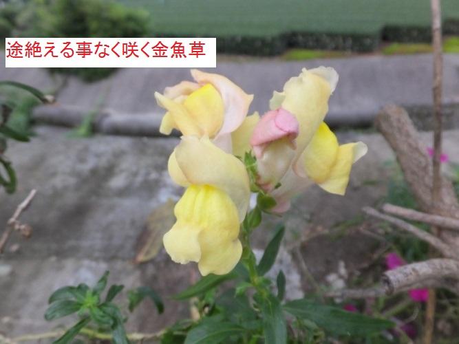 DSCF3620_1.jpg