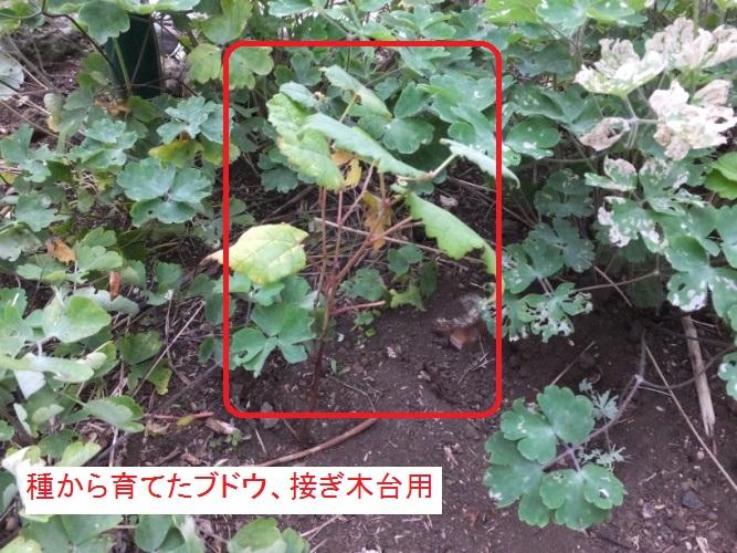 DSCF3623_1.jpg