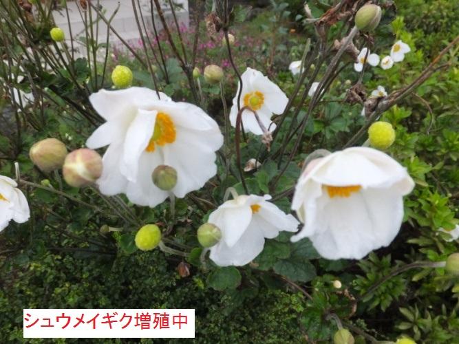 DSCF3643_1.jpg