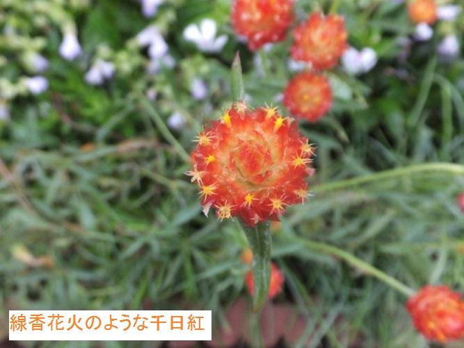 DSCF3698_1.jpg