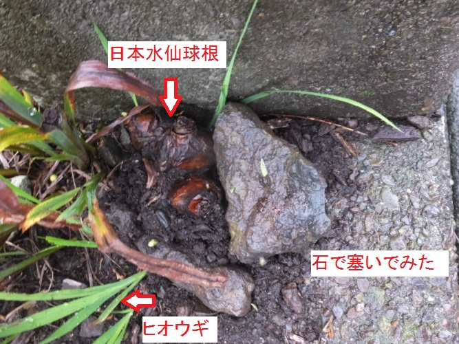 DSCF3709_1.jpg