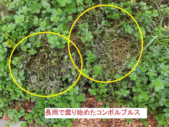 DSCF3757_1.jpg