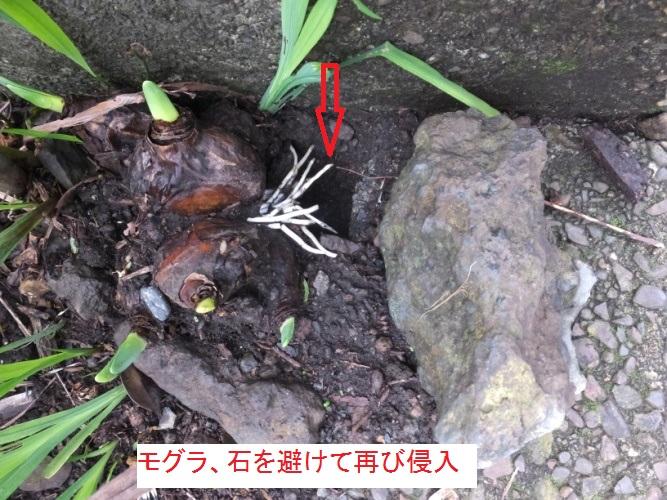 DSCF3907_1.jpg