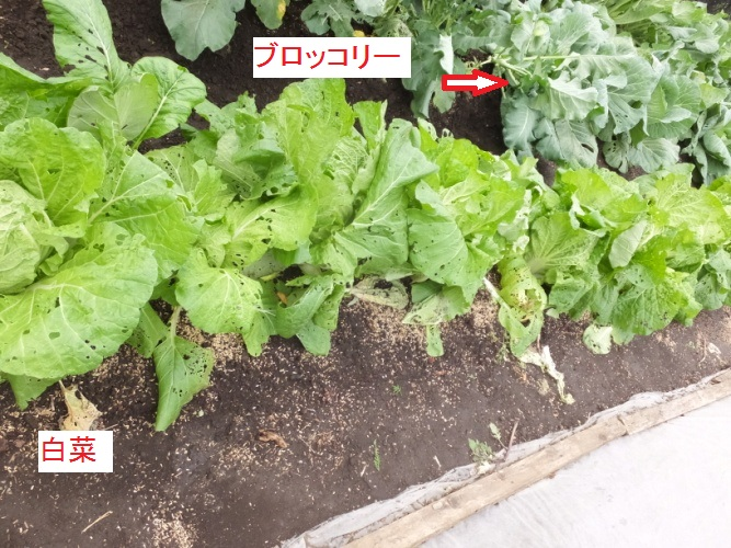 DSCF3946_1.jpg