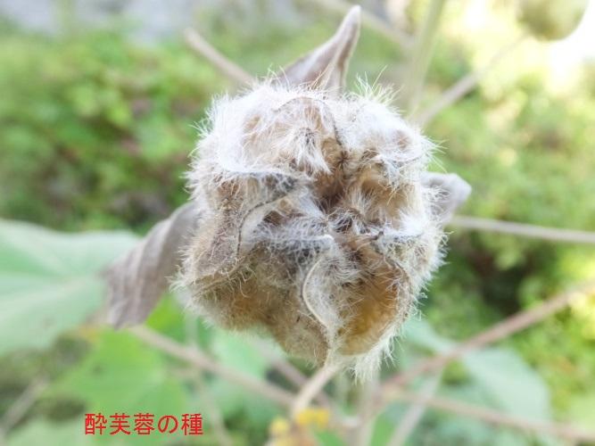 DSCF4061_1.jpg