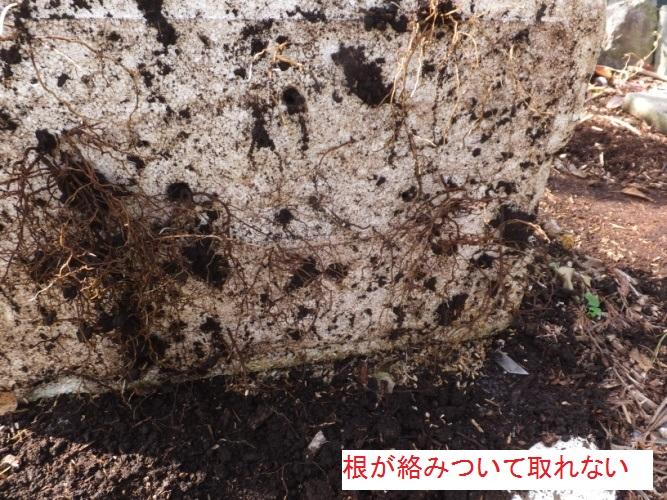 DSCF4613_1.jpg