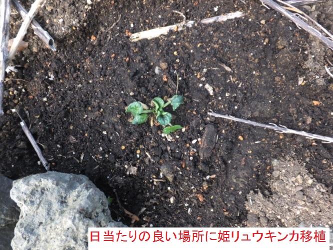 DSCF4617_1.jpg