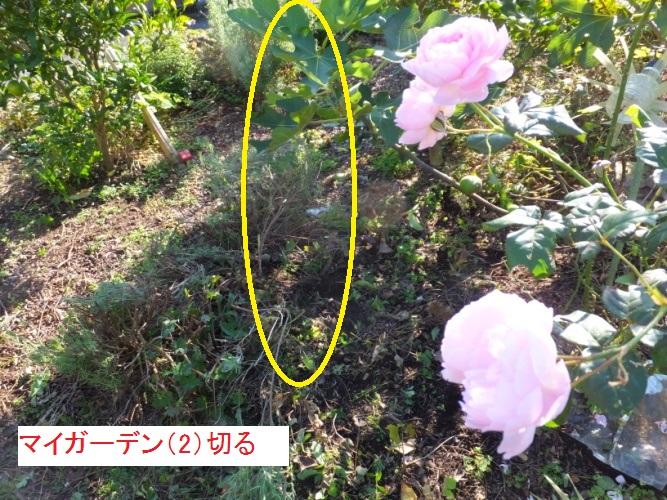 DSCF4857_1_201711171447331ef.jpg