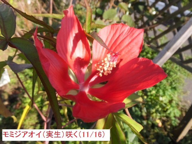 DSCF4862_1_20171117144730b7e.jpg