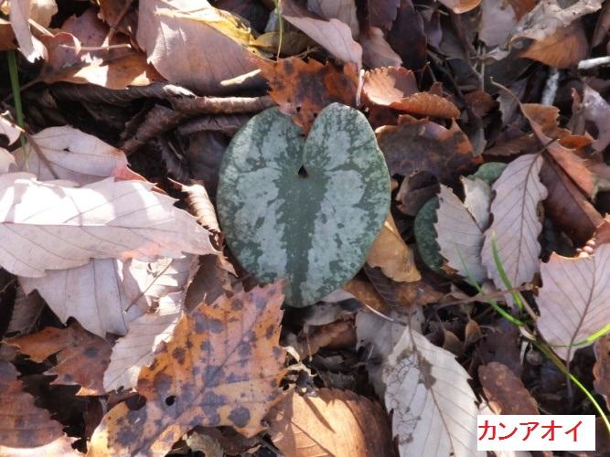 DSCF4946_1.jpg