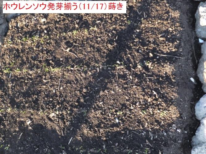 DSCF4993_1_20171128182343c5c.jpg