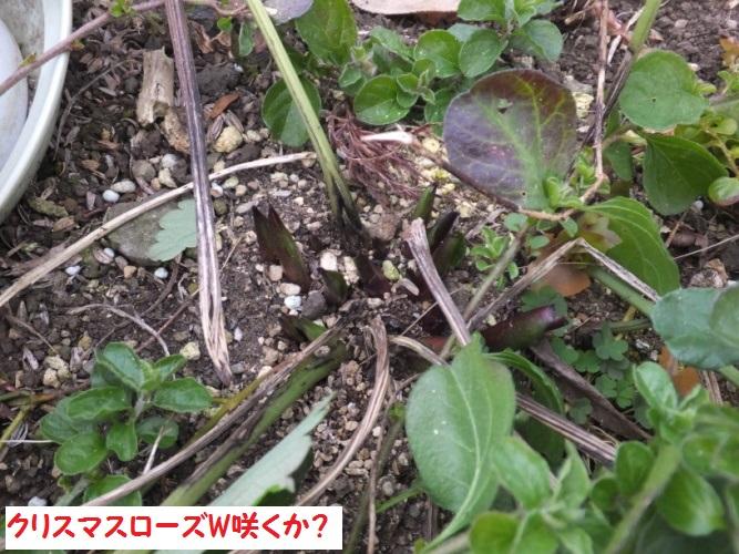 DSCF5376_1.jpg