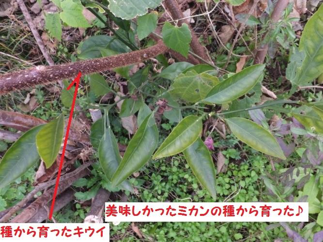 DSCF5411_1.jpg