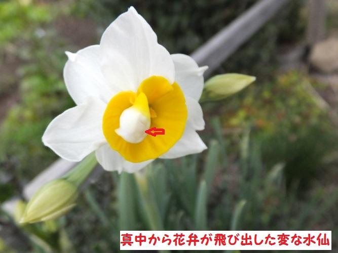 DSCF5414_1.jpg