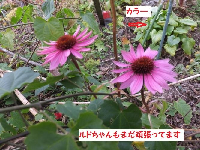 DSCF5416_1.jpg