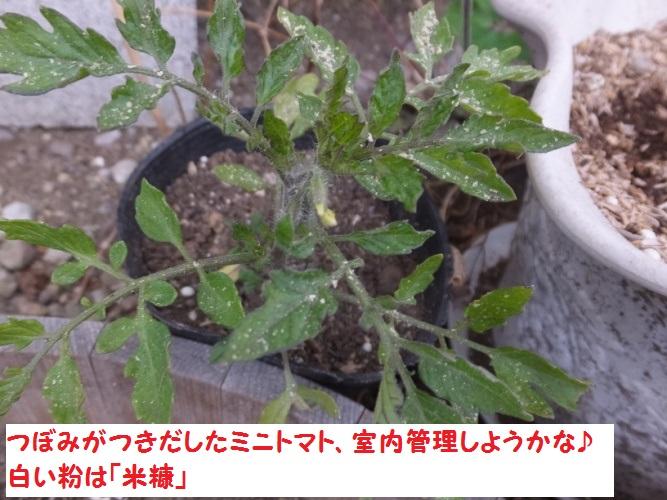 DSCF5420_1.jpg