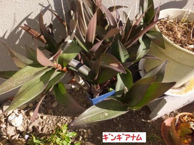 DSCF5429_1.jpg