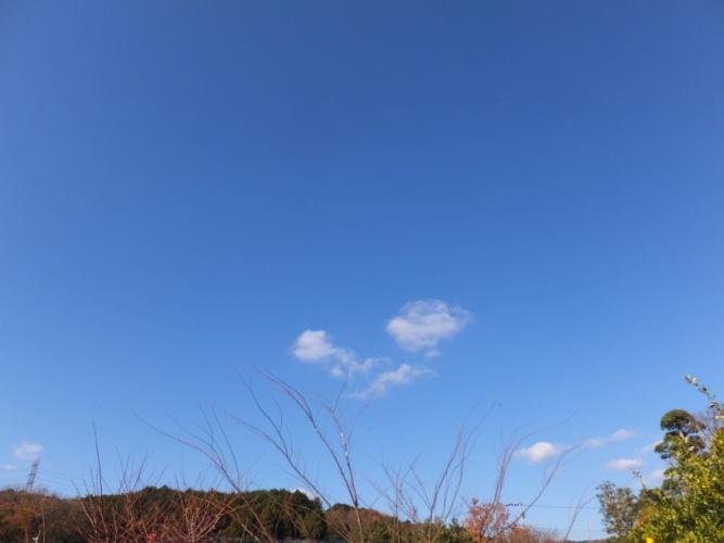 DSCF5460_1.jpg