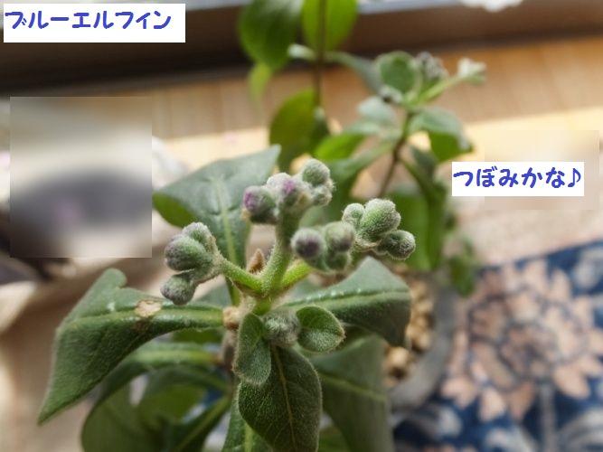 DSCF5837_1.jpg