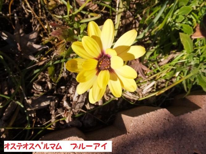 DSCF5843_1.jpg