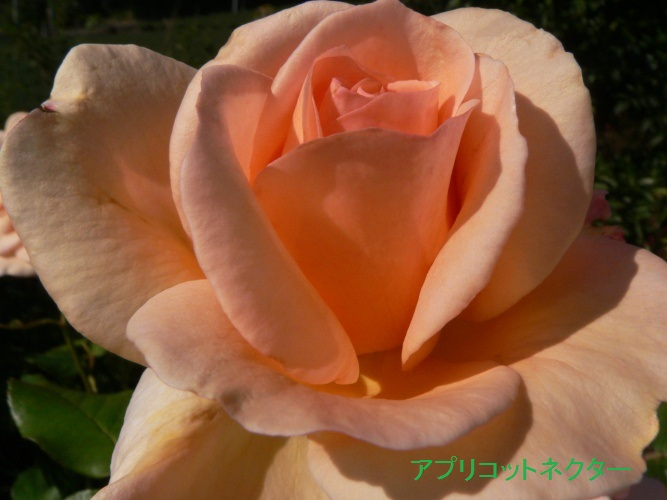 P1360739_1.jpg