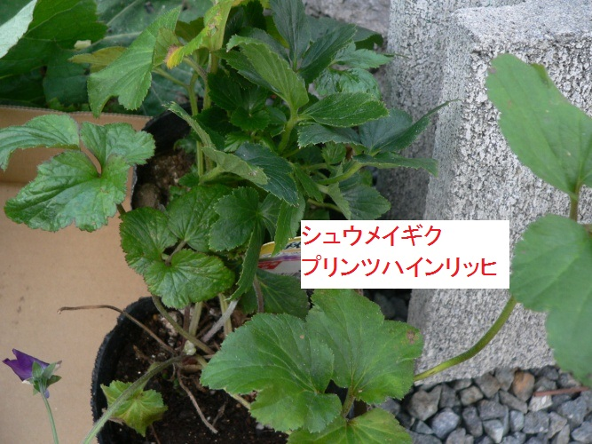 P1360841_1.jpg