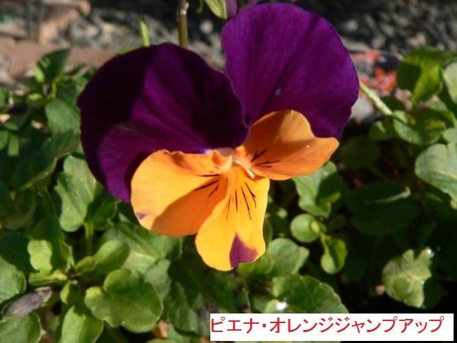 P1380162_1.jpg