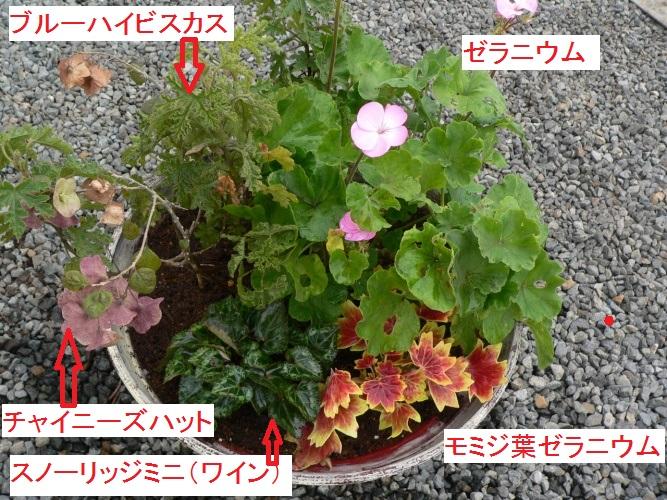 P1380184_1.jpg