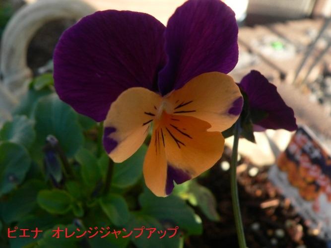 P1380251_1.jpg
