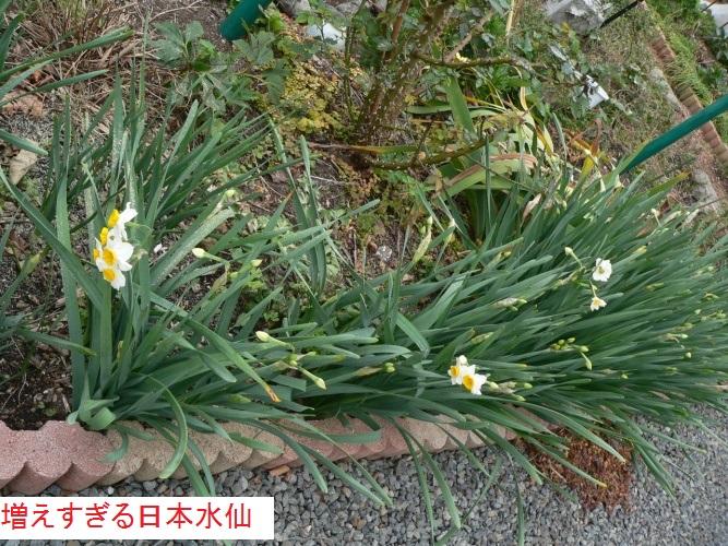 P1380359_1.jpg