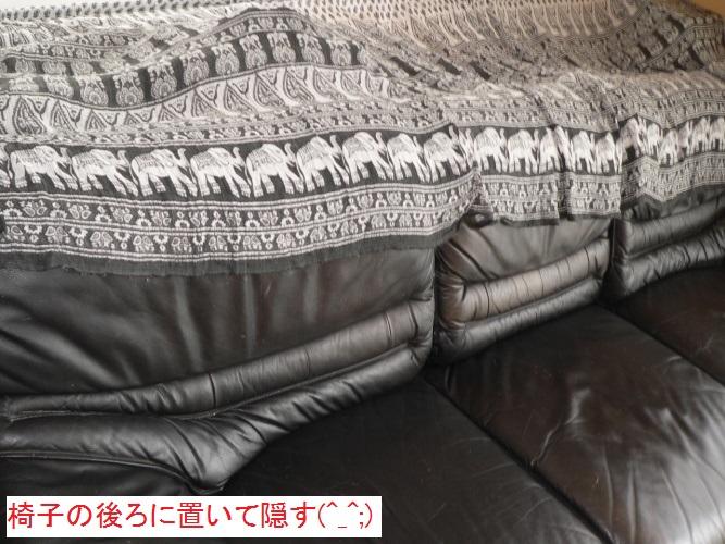 P1380398_1.jpg