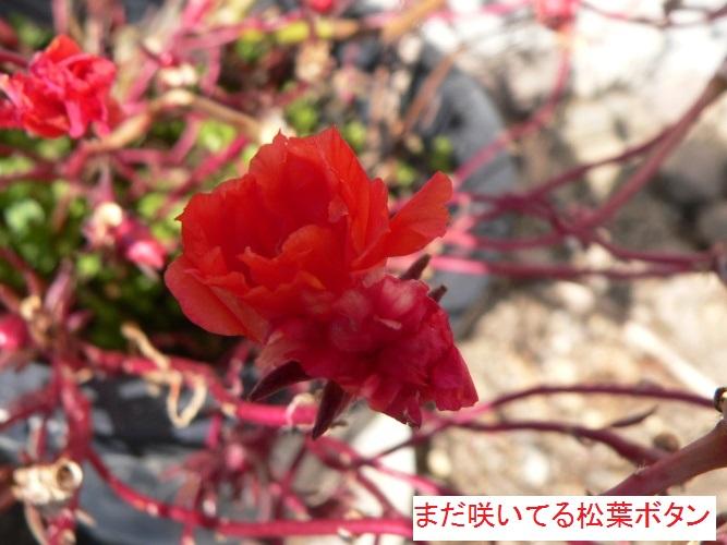 P1380434_1.jpg