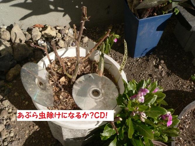 P1380497_1.jpg