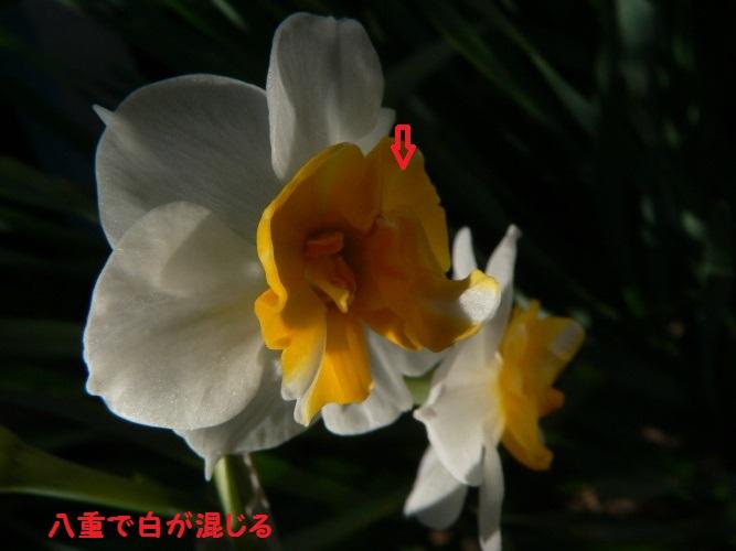 P1380501_1.jpg