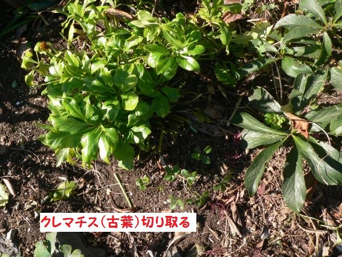 P1380511_1.jpg