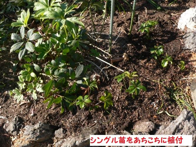 P1380541_1.jpg