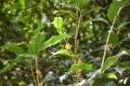 29秋金木犀