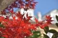 29秋紅葉