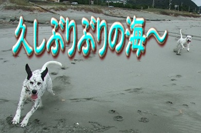 blog_10020003.jpg