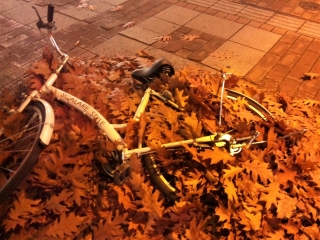 bicycle in leaves